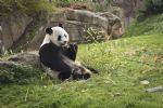 Escapade familiale au zoo de Beauval