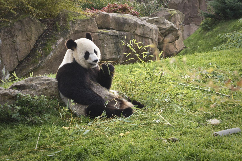 Zoo de beauval tarif for Chambre zoo de beauval
