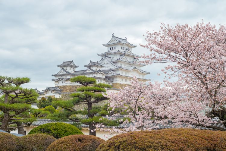 Château de Himeji au printemps